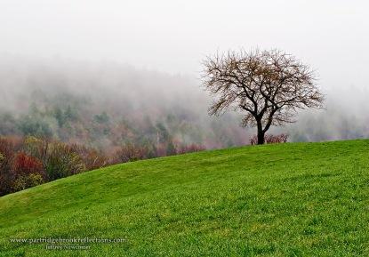 Lone Apple Tree at Walpole Hampshire by Jeff