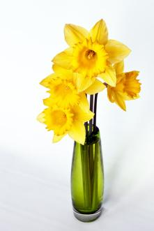 Yellow Daffodils In A Green Vase by Kent Sorensen