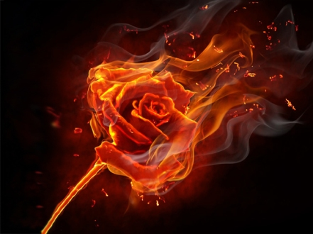 red rose fire of love
