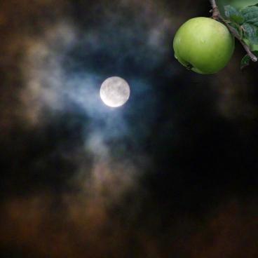 Abalon moon Oct12