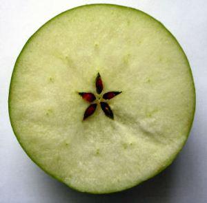 apple-cut-across-equator