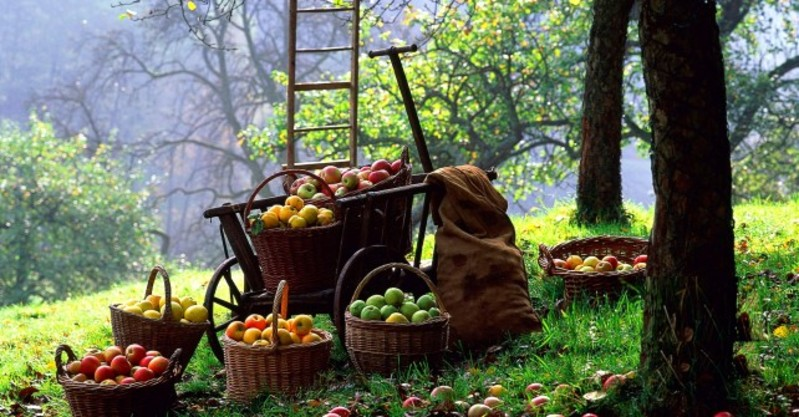 apples-642x335