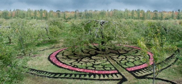 the-best-land-art-a-giant-mandala-made-of-apples-002