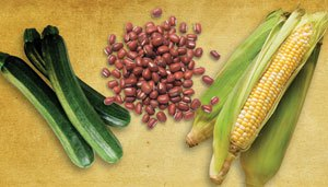 the-three-sisters-of-squash-tepary-beans-and-corn